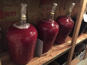 Plum Crazy during fermentation